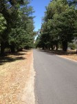 Avenue of Honour - Allans Flat - Indigo Shire