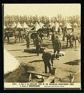 Horse lines at Broadmeadows Military Camp. Pictures Collection, State Library of Victoria.
